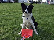 Beverton Malbi wins four firsts at her very first obedience shows